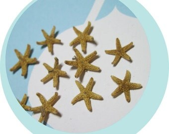 10 Tiny Starfish  - Tampa Bay Sea Stars Approx  1/2""