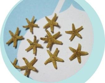 10 Tiny Tiny Starfish  - Tampa Bay Sea Stars