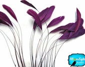 Stripped Feathers, 1 Dozen - PURPLE Stripped Coque Tail Feathers: 537