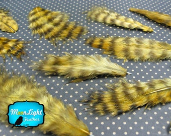 Fluffy Feathers, 1 Dozen - GOLDEN OLIVE Grizzly Rooster Fluff Feathers : 841