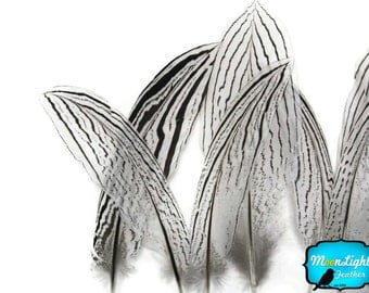 "Tail Feathers, 10 Pieces - 4-6"" NATURAL SILVER Tail pheasant feathers : 4228"