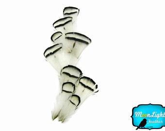 White Pheasant Feathers, 1 Dozen - NATURAL WHITE Lady Amherst Pheasant tippet Feathers : 393