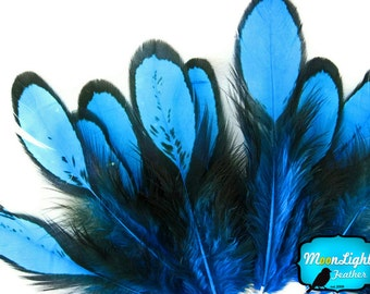 Fly Tying Feathers, 1 Dozen - BLUE Laced Hen Loose Saddle Feather: 361