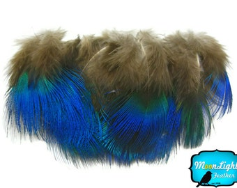 Small Peacock Feathers, 100 Pieces - IRIDESCENT BLUE Peacock Plumage feathers : 467