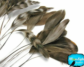 Stripped Feathers, 1 Dozen - NATURAL chinchilla Stripped Coque Tail Feathers : 508
