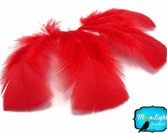 Turkey Feathers, 1 Pack - RED Turkey T-Base Plumage Feathers 0.50 oz. : 160
