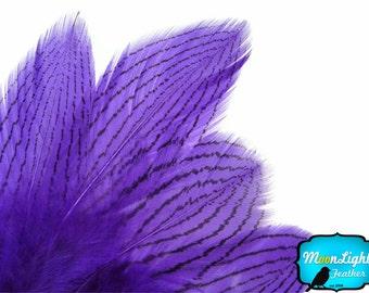 Pheasant Feathers, 1 Dozen - PURPLE Silver Pheasant loose feathers : 425