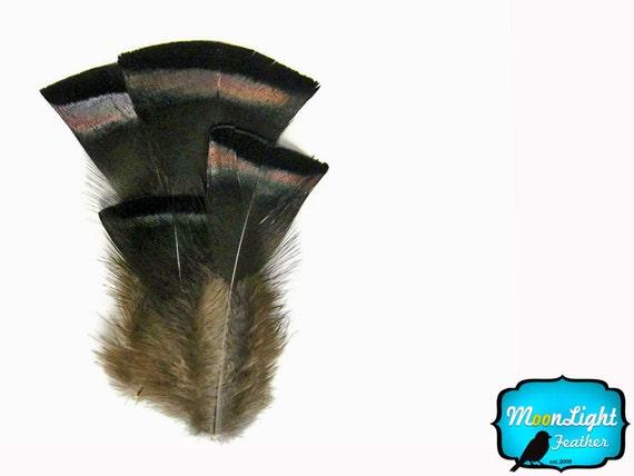 Wild Turkey Feathers, 20 Pieces- Bronze Black Wild Turkey Flats Body Feathers : 141