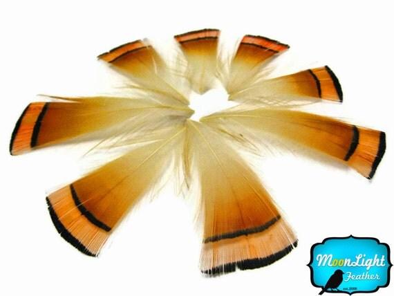 Orange Pheasant Feathers, 1 DOZEN - NATURAL Orange Golden Pheasant tippet cape feathers : 460