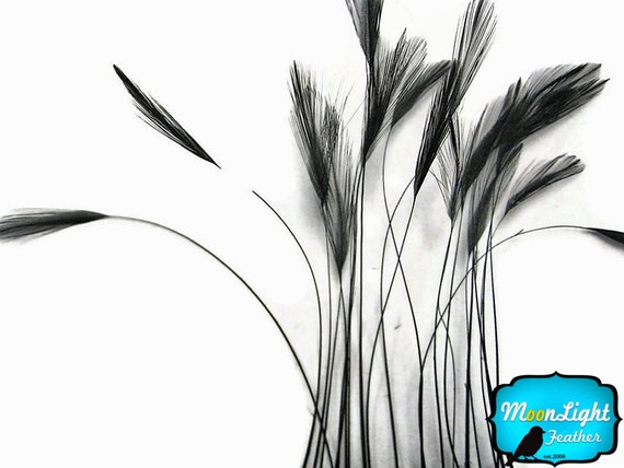 Stripped Feathers, 1 Dozen - BLACK Stripped Rooster Hackle Feather: 416
