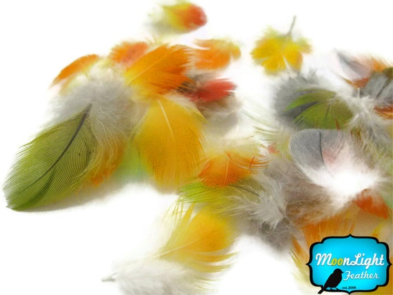 50 Pieces - MULTICOLOR Mini Macaw and Parrot body Feathers : 1348