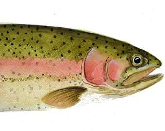 Rainbow Trout Fish Note Cards