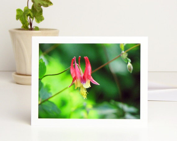 Floral Photo Note Card, Wild Columbine Flower, red yellow green nature photography all occasion blank stationery notecard