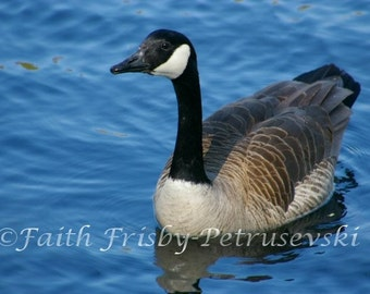A Day On The Lake Goose Photograph 8x10