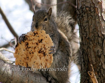 Lunch Time 5x5 Squirrel Fine Art Photograph