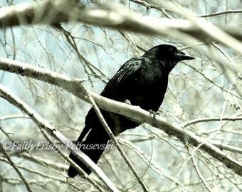 Little Black Bird 5x7 Fine Art Photograph