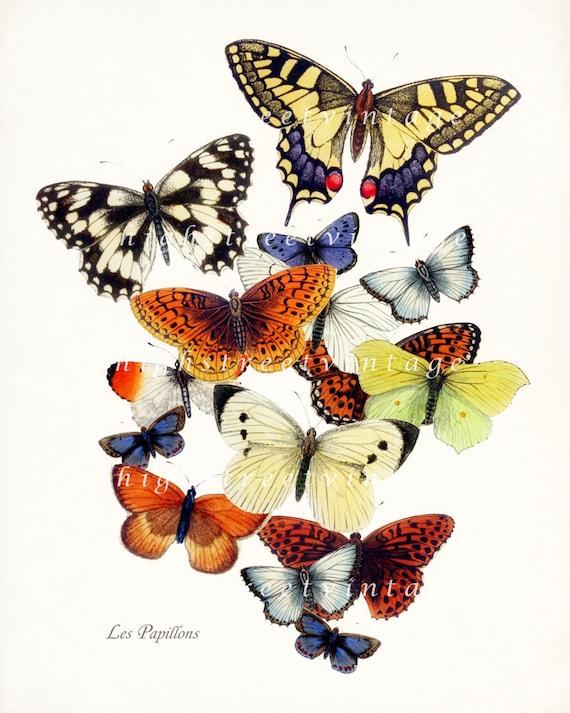 Butterfly Garden Giclee Art Print 8x10