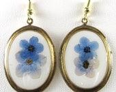 Baby Blue Eyes Flowers,  Earrings, Real Flowers, Resin, Antiqued  Plated Brass (872)