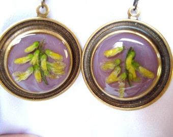 SALE!  Clover Flowers,  Earrings, Real Flowers, Resin, Antiqued Brass (834)