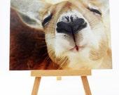 Fine Art Photography - Affordable Art Postcard - Kangaroo Love