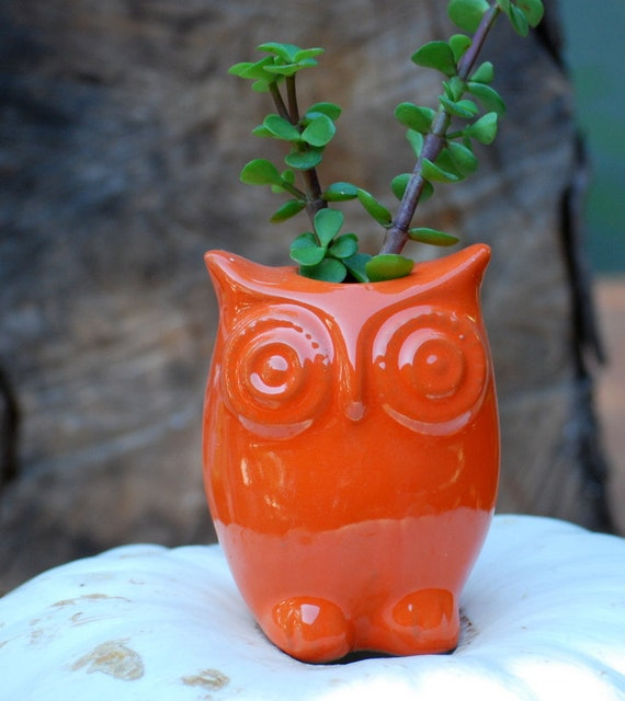 OWL planter  in orange