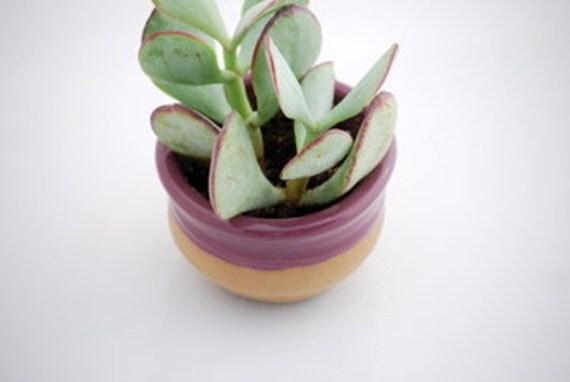 planter with dish in grape purple