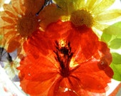 Autumn Pressed Flower Suncatcher with Orange Cosmos, Orange & Yellow Daisy, Pansy, Blue Larkspur