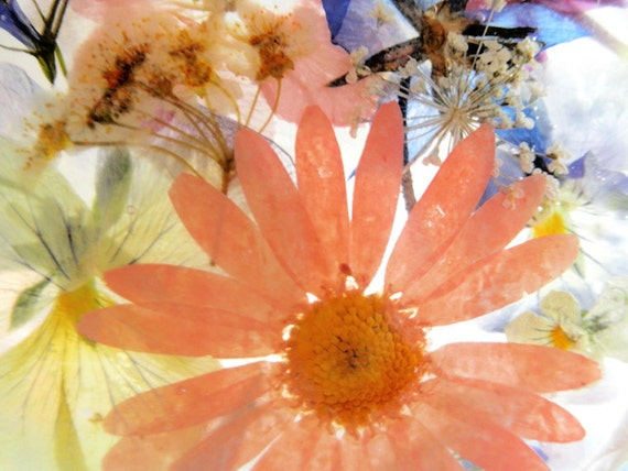 Suncatcher with Pressed Flowers- Peach Daisy, Pink Larkspur, Blue Lobelia, Pansies, Queen Anne's Lace, Bridal Veil, Heather