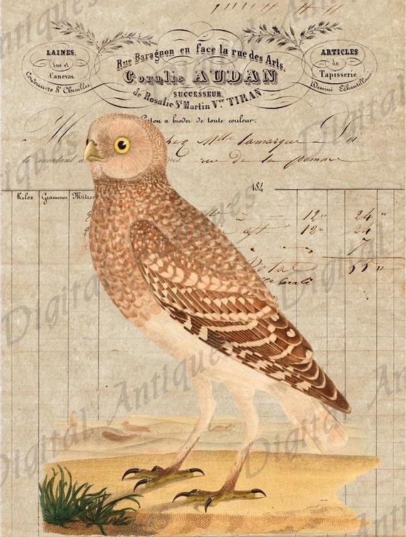 Vintage Owl Images Collage Sheet  Printable  Digital Download