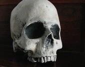 Plaster Skull III