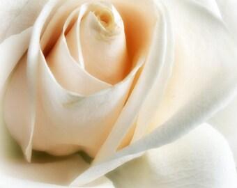 Photography Print 12x12 White Rose Romance