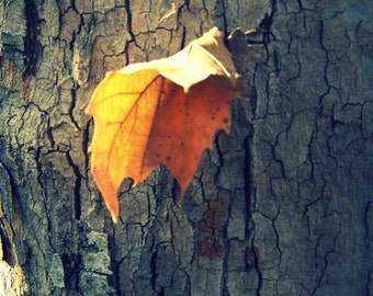 Photography Print Lonely Leaf