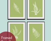 Ferns Garden Botanical Prints (Series D) Set of 4 - Art Prints (Featured in Basil and White)