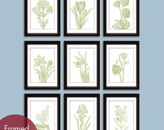 Wild Flower Botanical Prints (Series G) Set of 9 - Art Prints -(Featured in Basil and White)