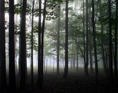 Forest Trees, Nature Photography,  Fog, Landscape, Fine Art,  Woodland, 16X20 Mat, Ready to Frame, Wall Art