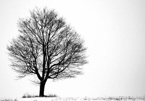 Lone Tree, Black and White, Winter Photo, Snow Scene, 11X14 Mat, Nature, Wall Hanging