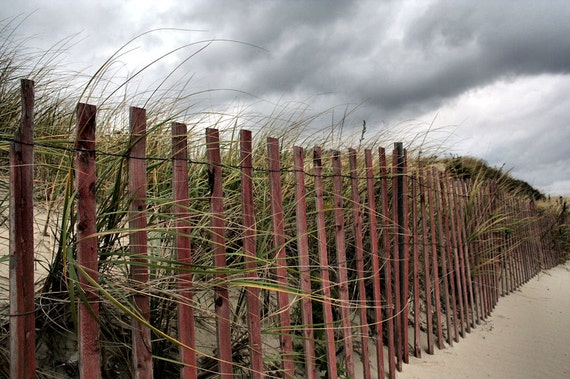 Fine Art Photography,  Nature Photography,  Grass and Sand, Fence,  Ocean Breeze Print, 8X10 Mat,  Ready to Frame, Wall Art