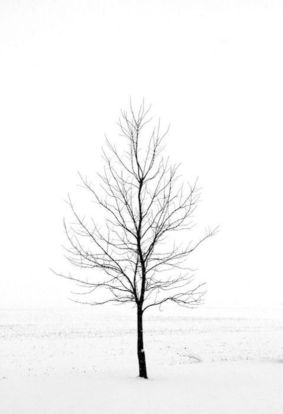 Minimalist Art, Winter Landscape Photography, Nature Photography, 16X24 Metal Print, Snow, Dead of Winter, Black and White, Ready to Hang