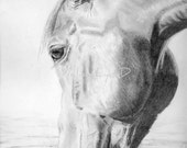 Equine pencil drawing print of horse drinking and reflection in water