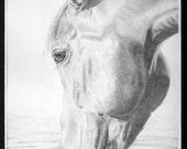 Custom pencil pet/animal portrait - face/headshot