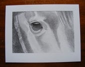 Horse's eye equine pencil drawing print