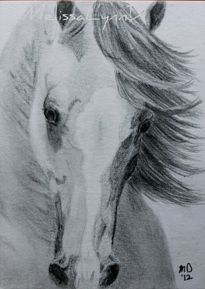 Horses drawings in pencil step by step for Cavallo disegno a matita