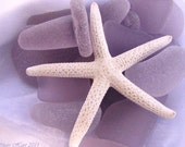 Sea Glass Photography 5x7 Print -LAVENDER DREAMS -sea glass, beach glass, mermaid tears, starfish, stopper, dreamy, purple, lilac, lavender