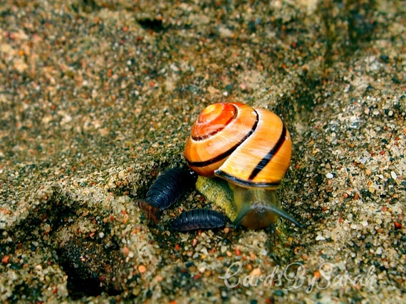 PIF Snail in the sand blank photography card