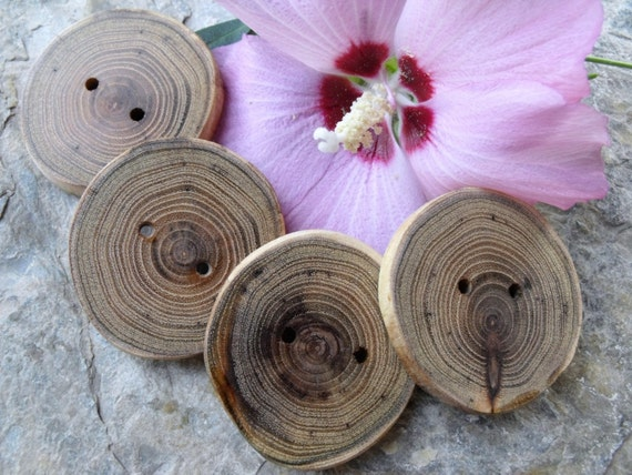 4 Lovely Locust Tree-Branch Buttons - 2 inches, 2 holes, Perfect for Journals, Decorative Pillows, Favor and Gift Boxes, Knitting and Sewing