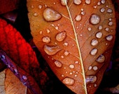 Leaf  Rainy Day Raindrops Copper Rusty Red Leaves Metallic Print Nature Fall Autumn Photography