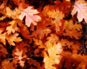 Fall Leaves Abstract Scrub Oak Autumn Rusts Red Colorado Foliage Rustic Cabin Lodge Photograph