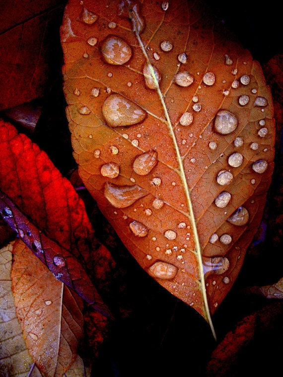 Leaf Rainy Day Raindrops Copper Rusty Red by ...