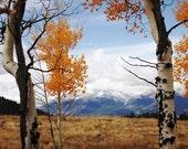 Mountain Top Aspen Meadow - 8 x 10 Fine Art Print