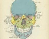Vintage Skull Print, Medical, Skeleton, Bones, Art, Antique Hand Atlas Anatomy, Goth, Weird, Quirky, Creepy, Skeleton, Halloween
